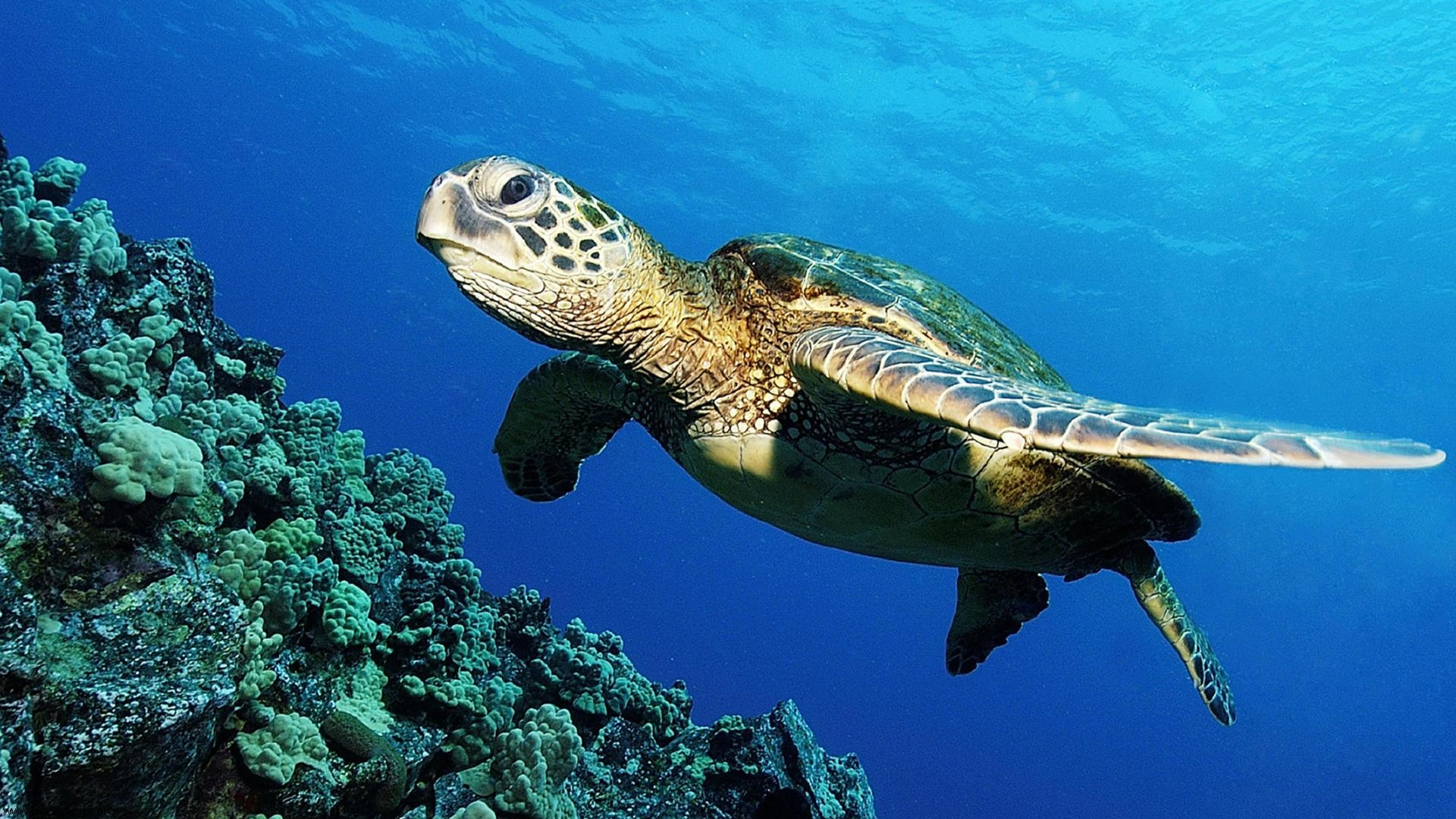 The Most Effective Diet Plan For Your Turtle
